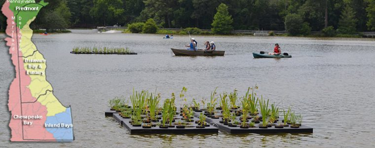 Floating Wetlands in Trap Pond