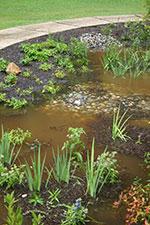 Blackbird Creek Headquarters Rain Garden after a rain event