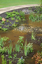 Blackbird Creek Headquarters Rain Garden after a rain event