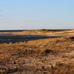 The Point in Cape Henlopen State Park by Audrey Ostroski